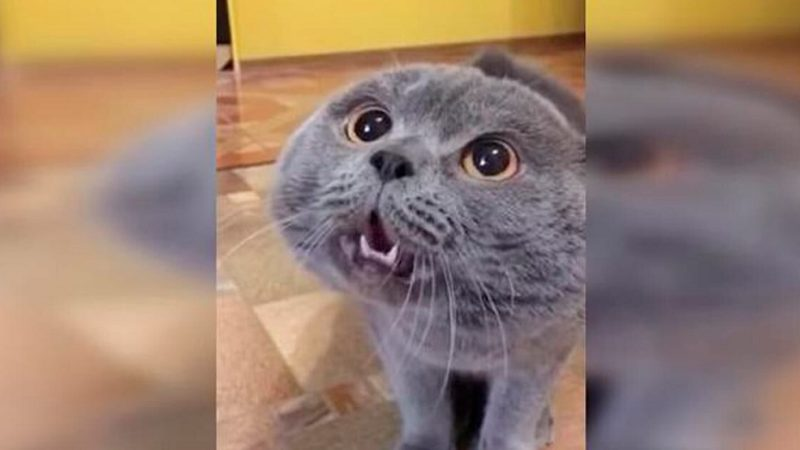 Երբ կատվին նեղացրեցին, նա սկսեց մարդկային լեզվով կանչել իր տիրուհուն